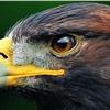加州旅馆 (Eagles(老鹰乐队)演唱歌曲)